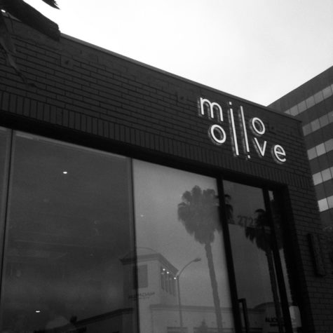 Restaurant Review: Milo & Olive—Is it as Good as it is Popular?