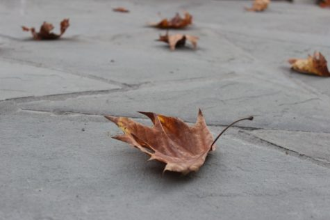 A fall leaf.  Photographer: Rosemary Pastron '16