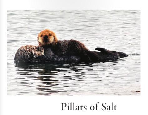 Last spring's issue of the Upper School Lit Mag— Pillars of Salt.