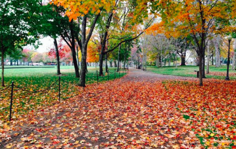 Five ways to embrace fall