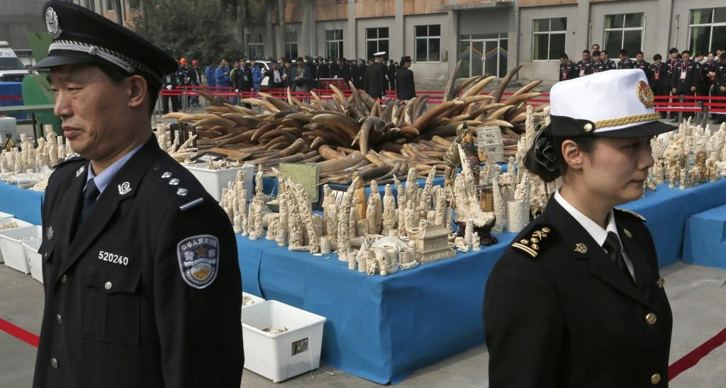 Chinese officials guard a massive amount of confiscated ivory. Last month, the Chinese government announced that it will officially ban all commerce in ivory by the end of 2017. Image source: Share America.gov.