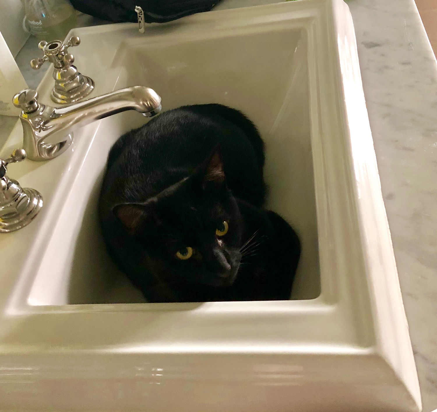 A black cat named Tito, owned by a family friend of Zoe Bush '22, lays in a sink. Black cats are unfairly associated with witchcraft around the time of Halloween.