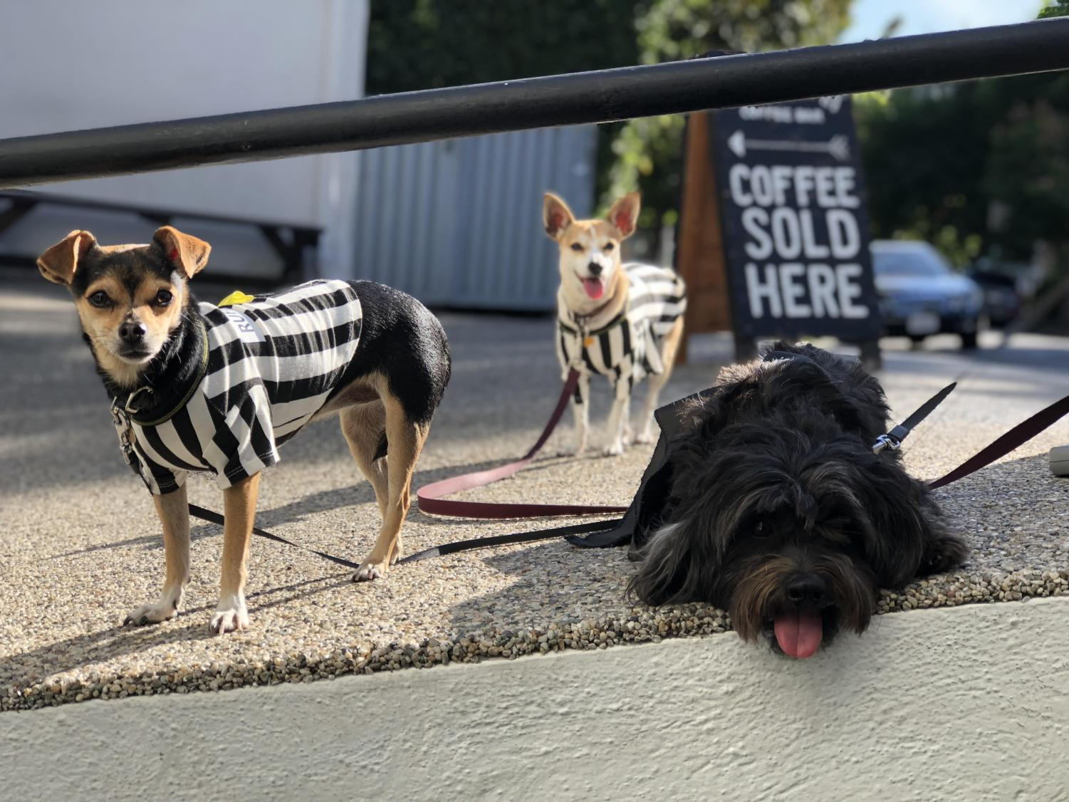Chelsea FC, Twiggy, and Mr. Hubble pose in front of Smith and Tait Coffee Shop. This year for Halloween, owner Kim Smith dressed them as rufferees.