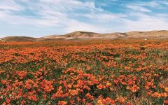 Column: Flower power — California's 'super bloom' phenomenon