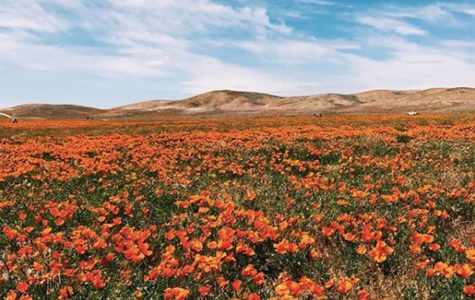 Column: Flower power — California's 'super bloom' phenomenon