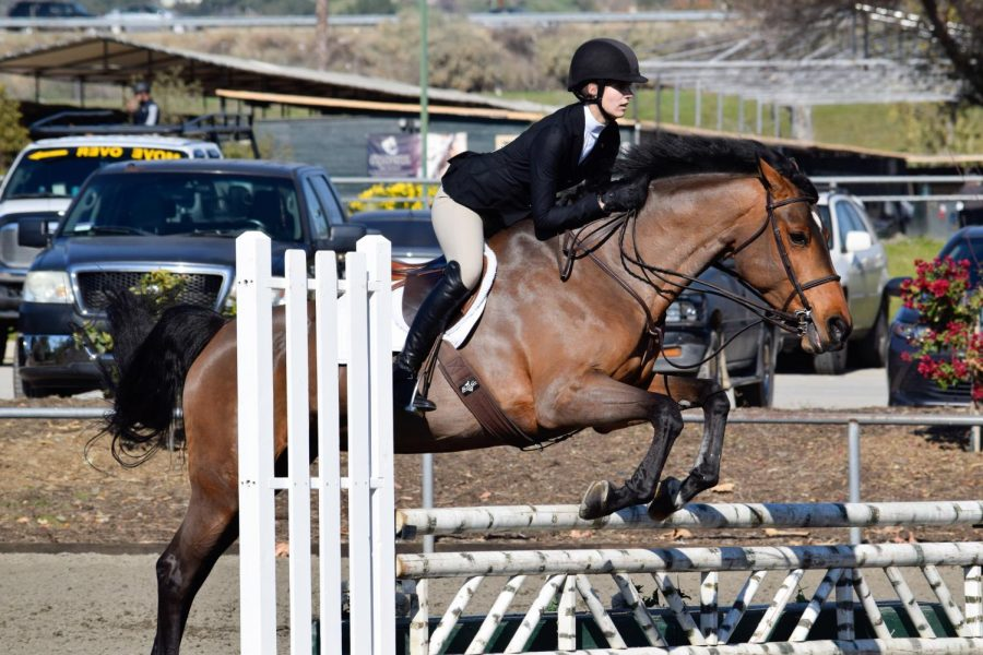 Emma+London+%2721+and+her+horse+jump+over+a+fence+during+one+of+their+shows+this+past+season.+The+equestrian+team+participates+in+the+Interscholastic+Equestrain+League%2C+better+known+as+the+ECL.