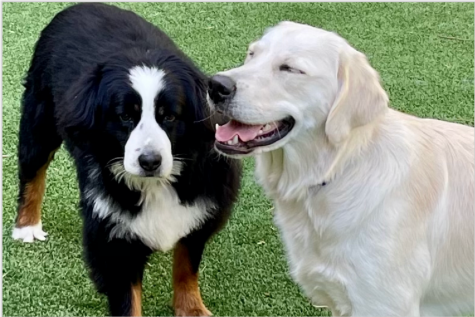 Over the last year, dogs have been able to help their humans more than usual. Dogs have been a great way to cope with stresses brought on by the pandemic.