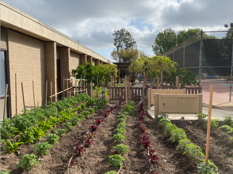 This picture was taken at the Kedren Community Center Garden where one of Marley Mills