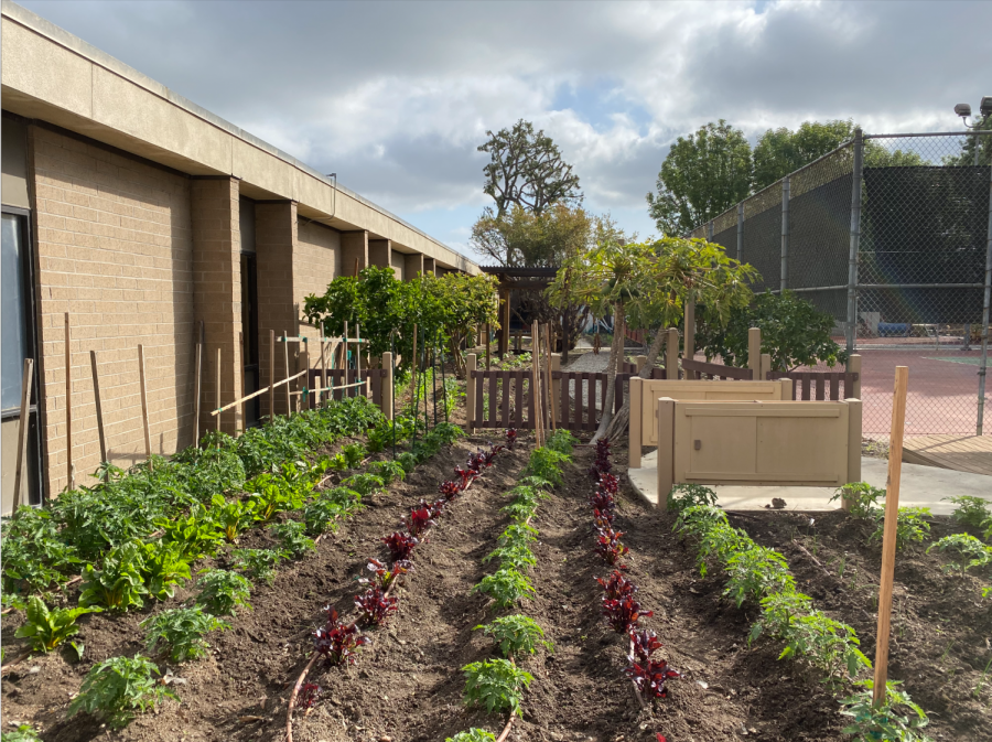 This picture was taken at the Kedren Community Center Garden where one of Marley Mills gardens are located. Marley Mills said that she felt happy to see the plant starting to grow  throughout the garden.