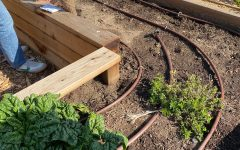 The Archer garden is used by sustainably classes to learn about soil health. One solution to food deserts is local gardens. Community gardens can help build relationships between neighbors, provide healthy foods and improve physical and mental health.
